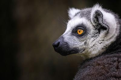 Zoo Amnéville Mai 17 - 023
