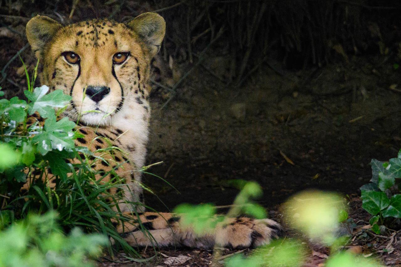 Zoo Amnéville Mai 17 - 052