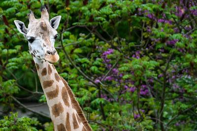 Zoo Amnéville Mai 17 - 042