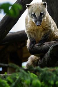 Zoo Amnéville Mai 17 - 005