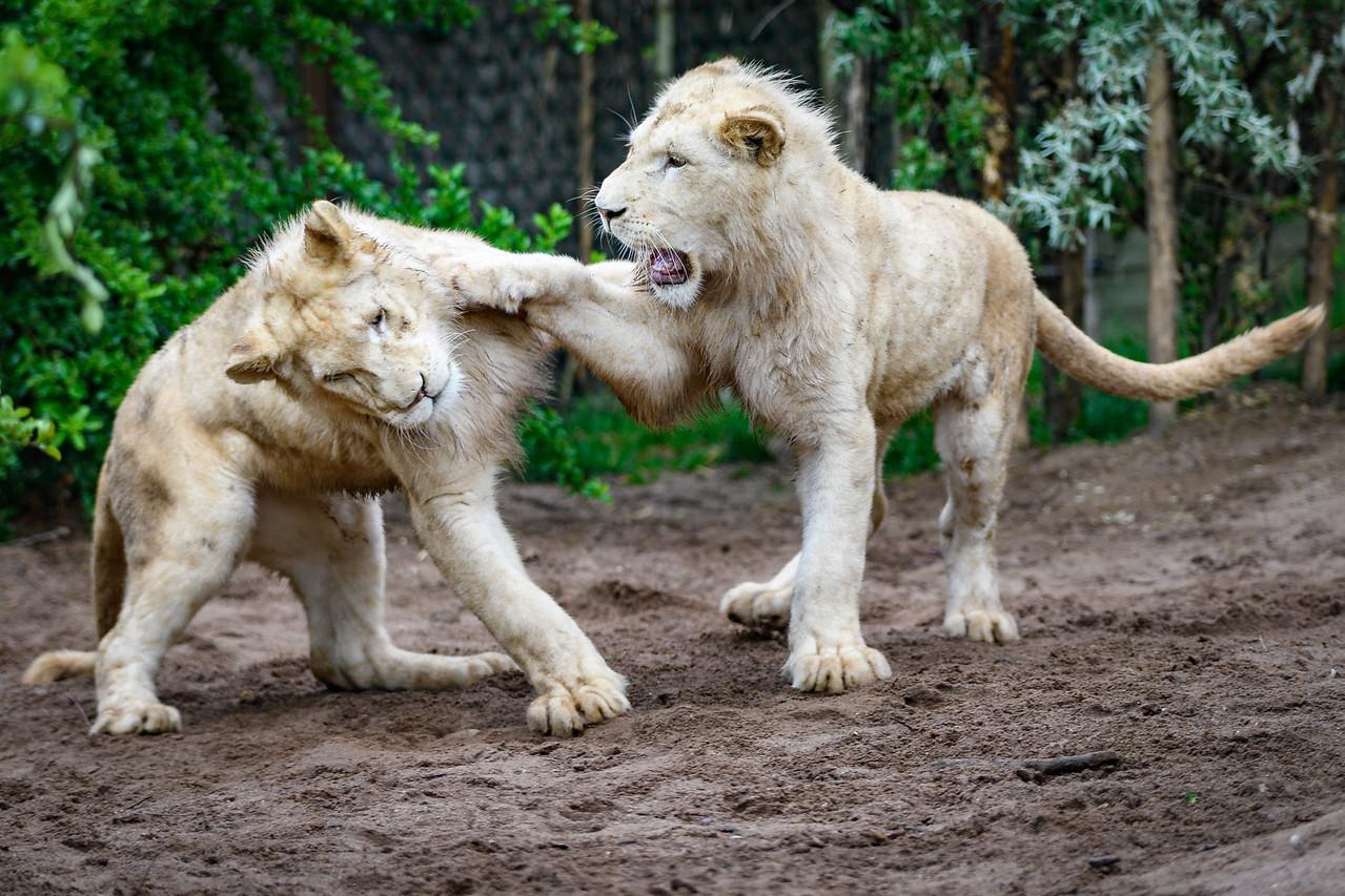 Zoo Amnéville Mai 17 - 085