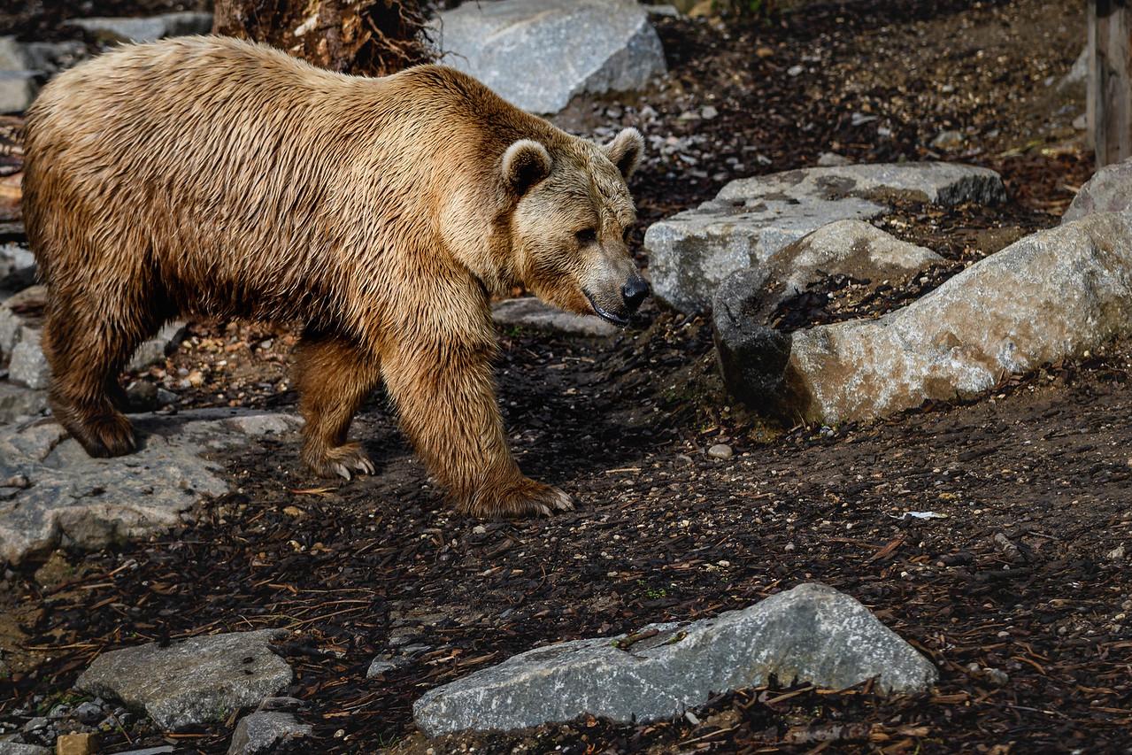 Zoo Amnéville Mai 17 - 091