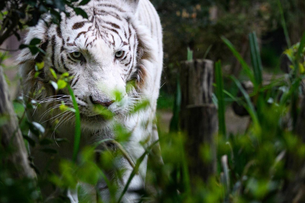 Zoo Amnéville Mai 17 - 054