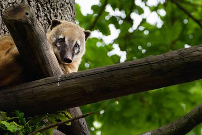 Zoo Amnéville Mai 17 - 002