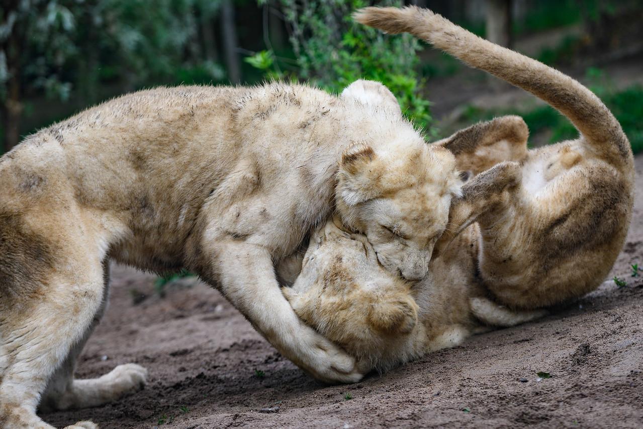 Zoo Amnéville Mai 17 - 082