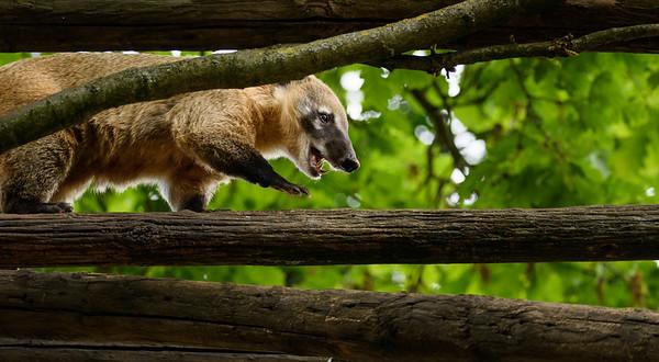 Zoo Amnéville Mai 17 - 003