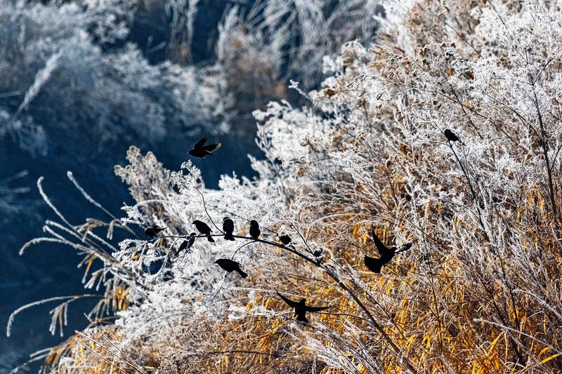 Cold Winter Birds