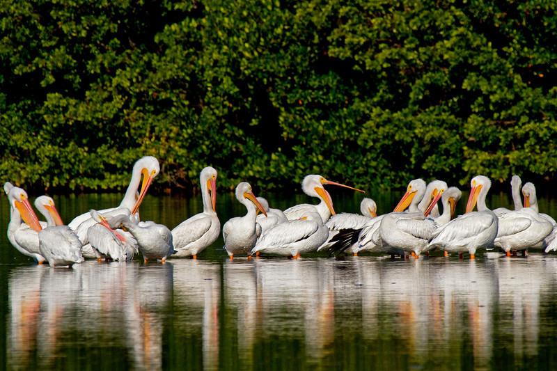 Pelican Gathering 2