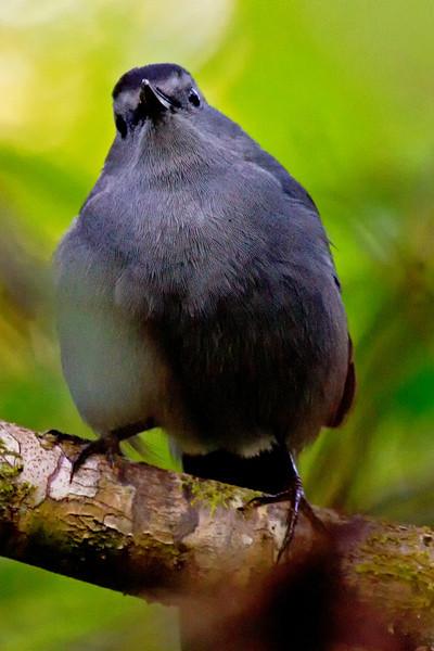 Morning Bird 2