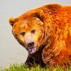 The Great Kodiak
