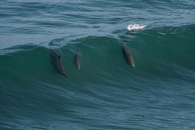 A Family Surf