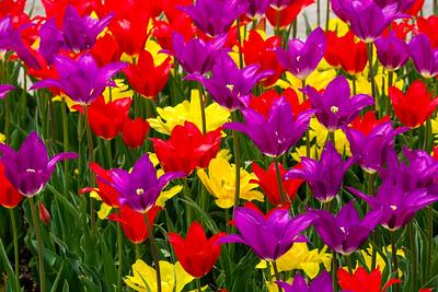 Forest Park Spring Color - Colorful