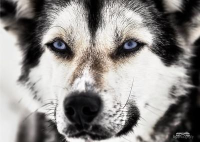 Arctic Glance #3