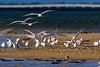 Tern Landing 1