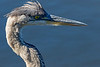 Great Blue Hunt 4