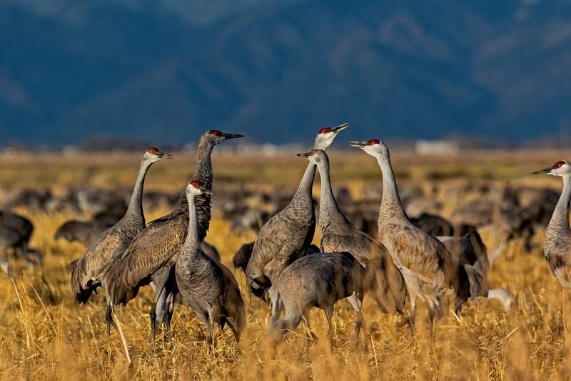 Crane Group Discussion