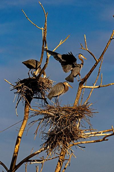 Heron Nesting Site 1