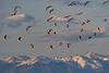Canada Geese Mountain