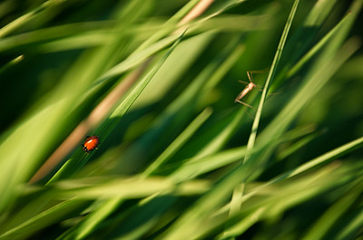 Bugs in the Grass