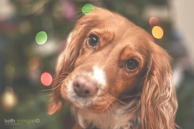 Christmas Ripley