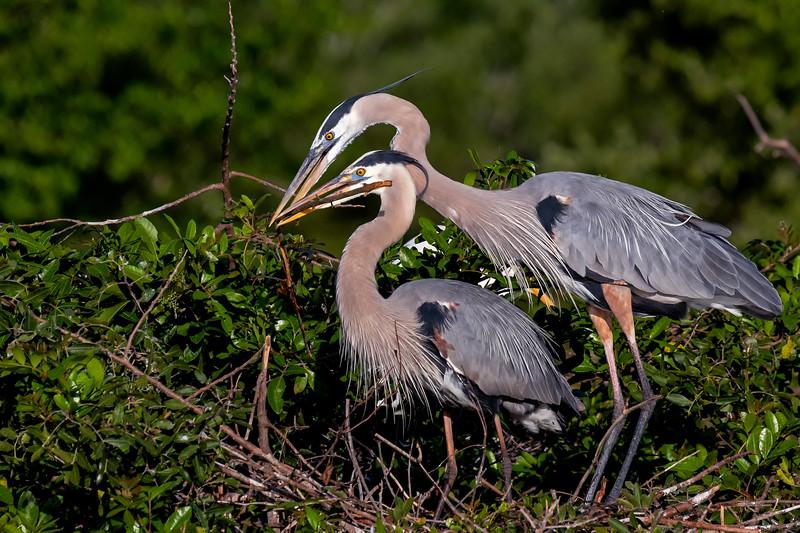 Nesting Pair 1