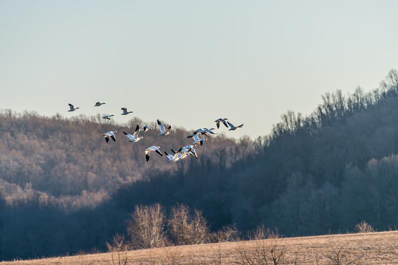 A Flock Flies Away