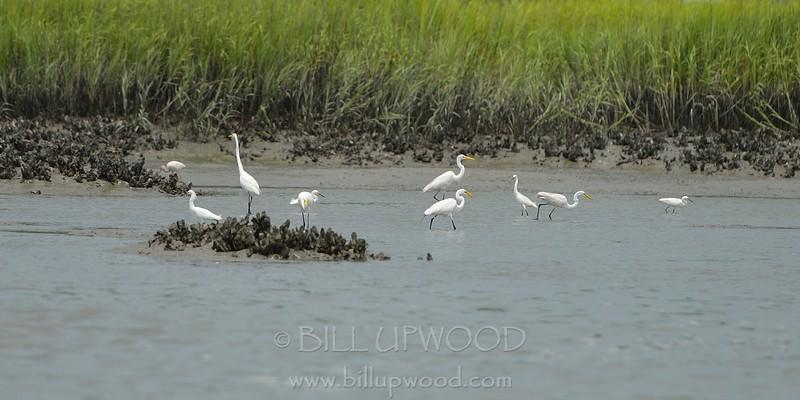 Cranes Fishing