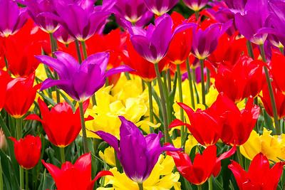 Forest Park Spring Color - Vivid