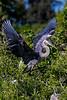 Nest Landing 2