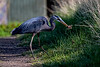 Heron Breakfast