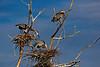 Heron Nesting Site 2