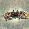 Langkawi Crab, Malaysia