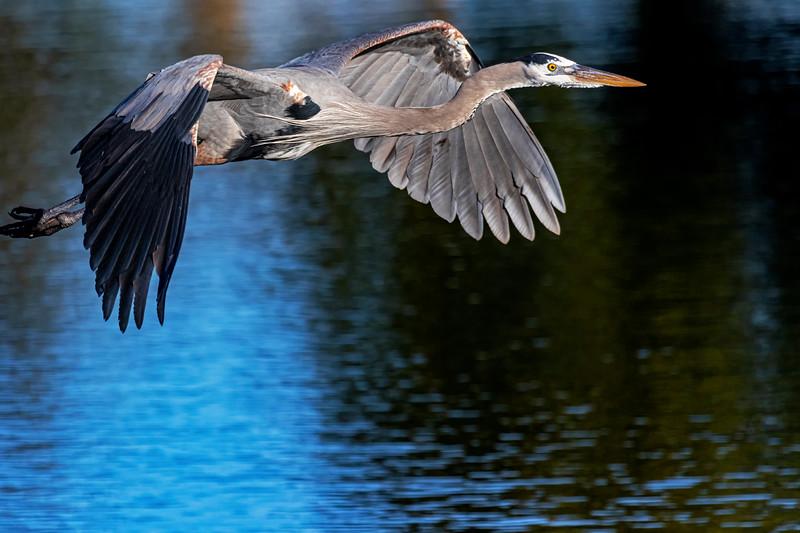 Lake Flight 2