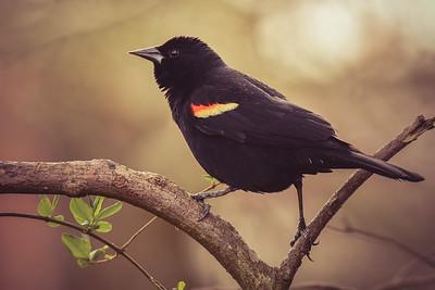 """""""Bye Bye Blackbird"""""""