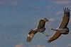 Crane In-flight Turn