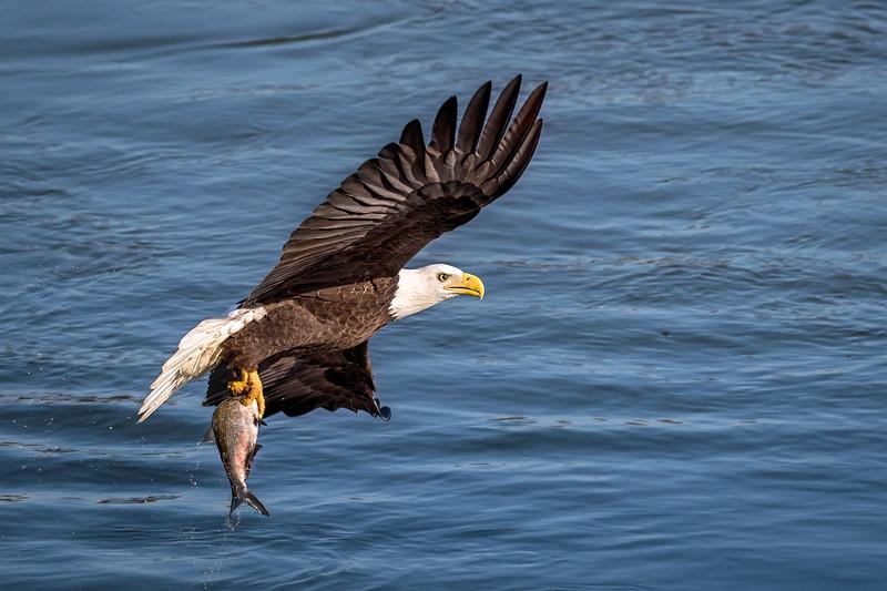 Eagle's Fresh Catch