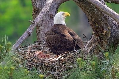 Woodlands Eagles 2021
