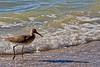 Shore Bird 5