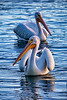 White Pelican Decision