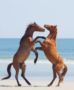 horsin' around.