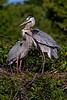 Nesting Pair 2