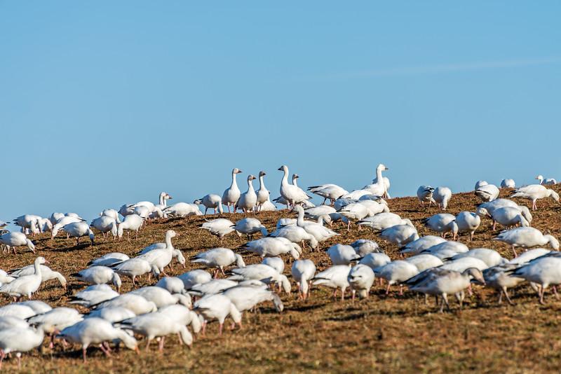 Snow Goose Leadership Meeting