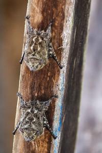 Exotic bug in a brach