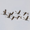 """Cranes In Flight"""