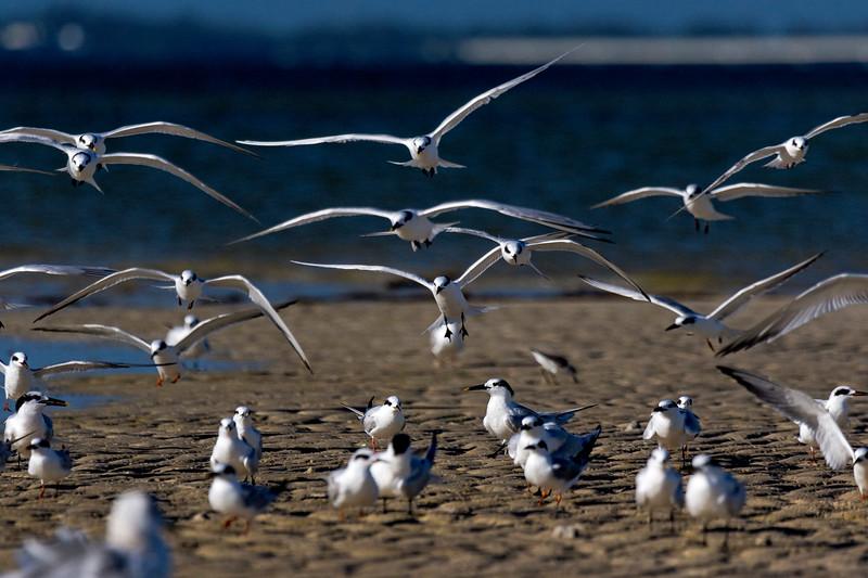 Tern Landing 2