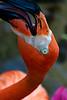 Flamingo Smile