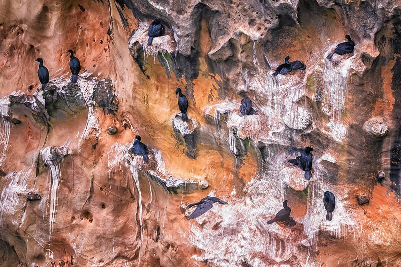 Cormorant Colony