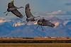 Crane Landing 1