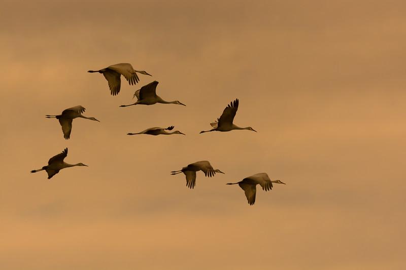 """""""Hiwassee River Cranes"""""""