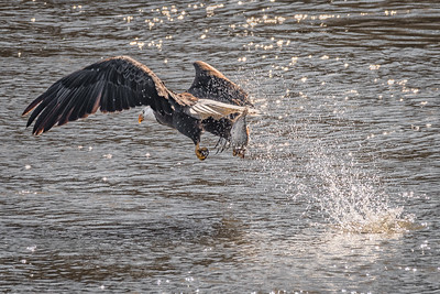 Eagle - Bam!-